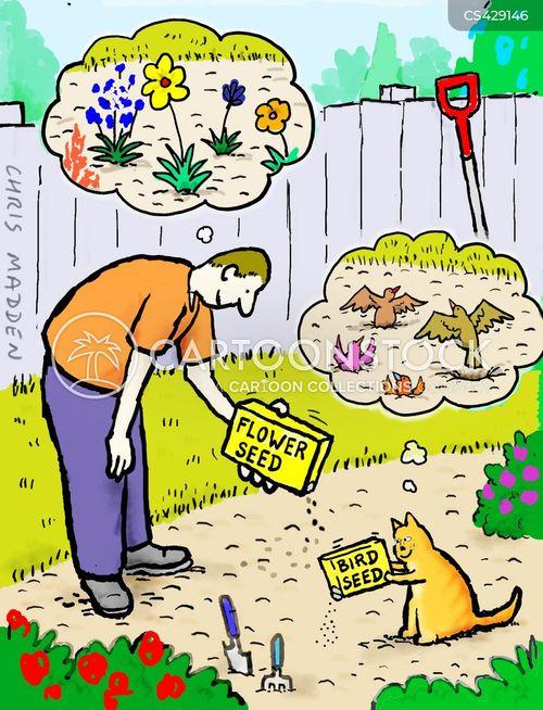 sow cartoon