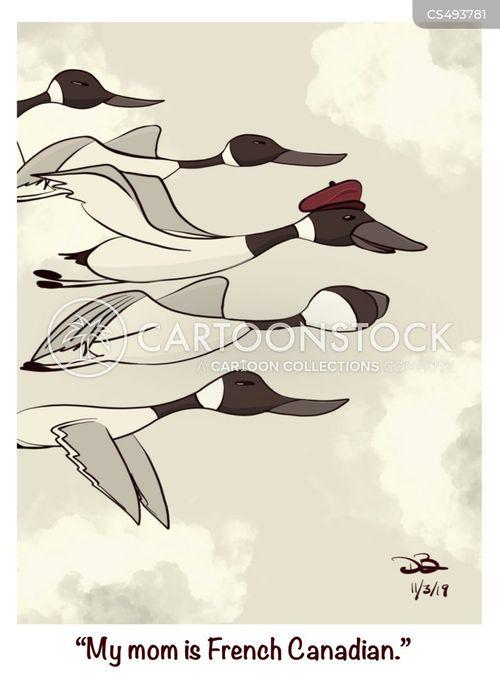 canadian goose cartoon