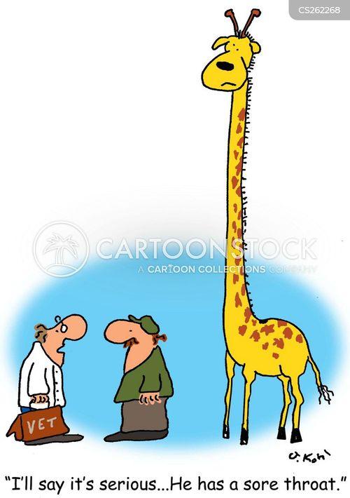 Giraffe throat