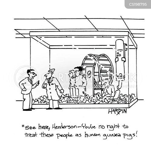 guinea pigs cartoon