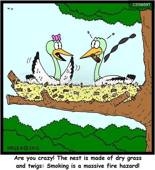 twig cartoon