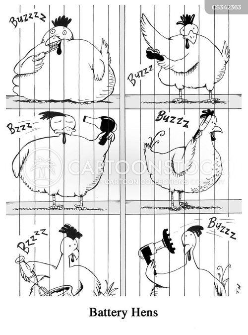free-range chicken cartoon