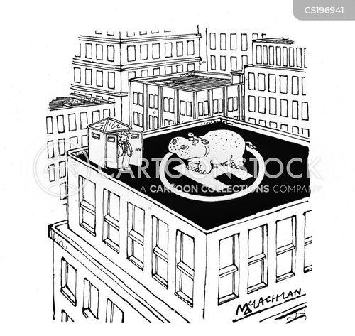hippopotamuses cartoon