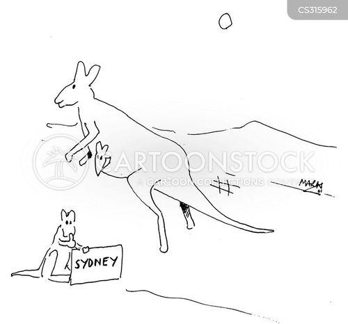 kangeroo cartoon
