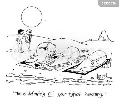 beaching cartoon