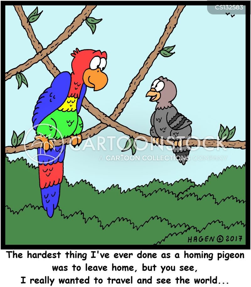 homing pigeons cartoon