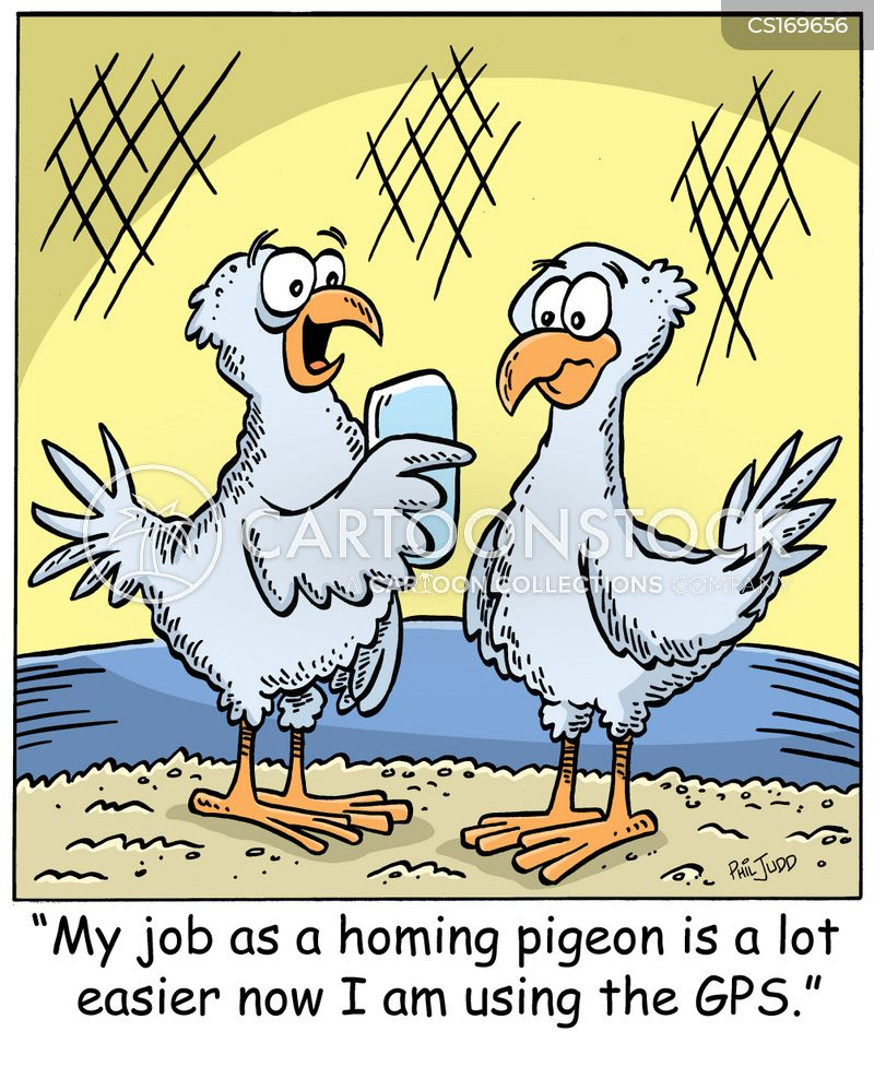 [Image: animals-homing_pigeon-homing_bird-carrie...15_low.jpg]