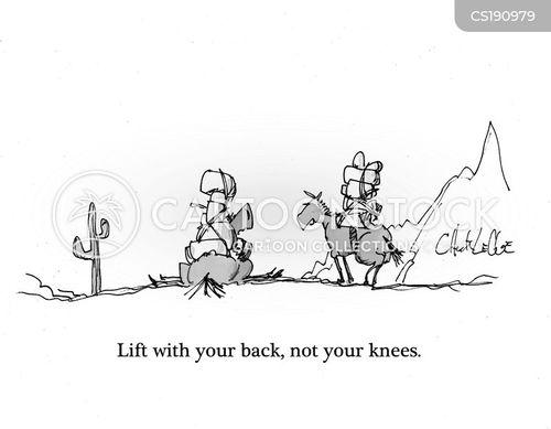 donkeys cartoon