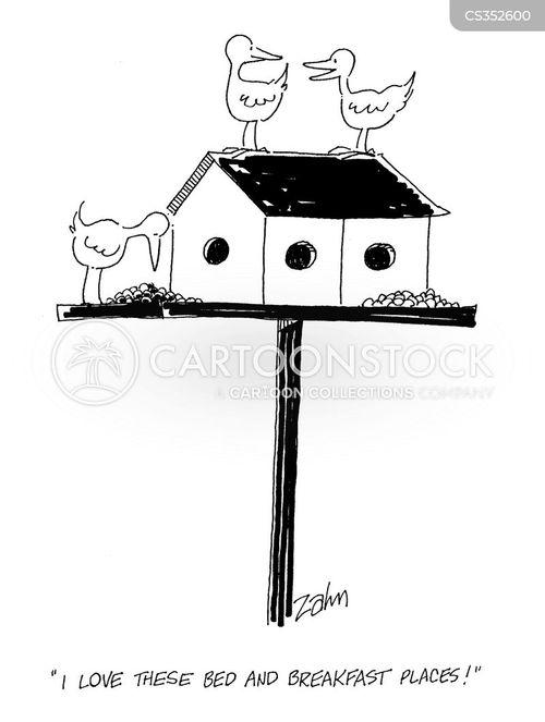bbs cartoon