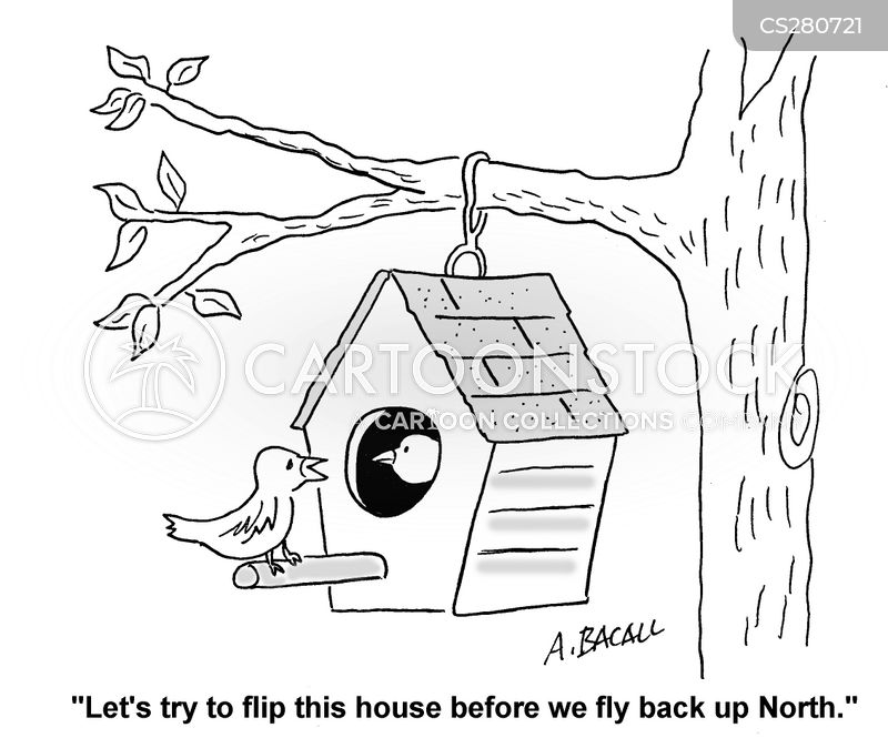 fly north cartoon