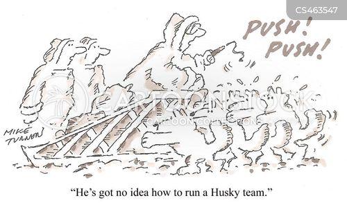 husky sledges cartoon