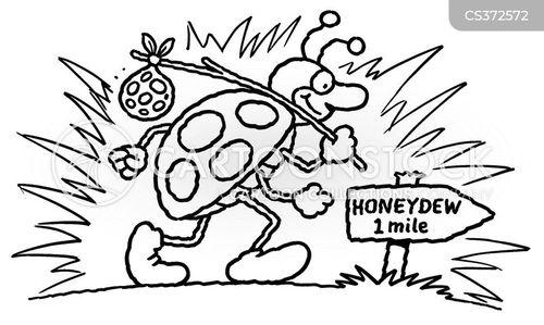 honeydew cartoon