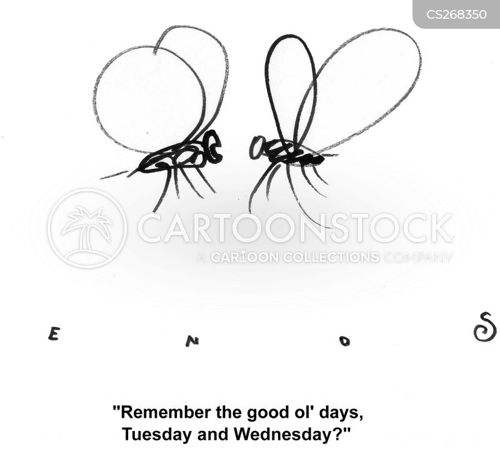 gnats cartoon