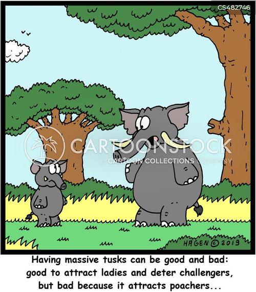 ivory poacher cartoon