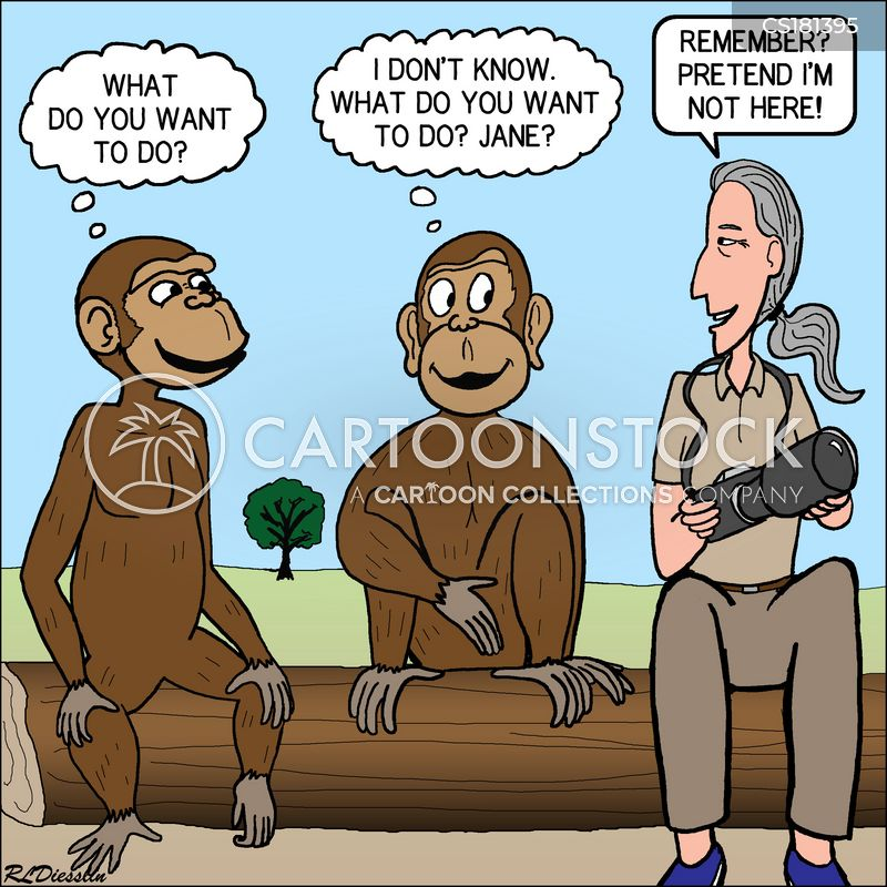 primatologist cartoon
