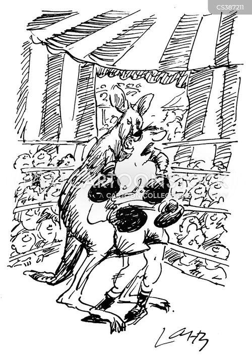 boxing kangaroo cartoon