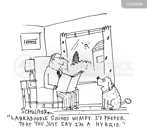 labradoodle cartoon