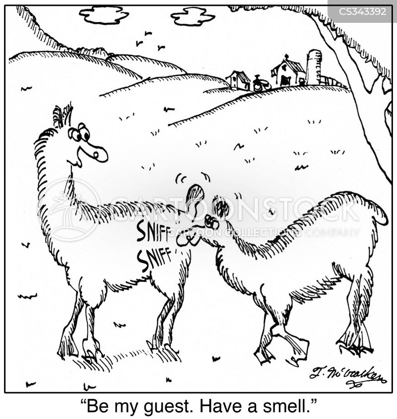 lama farms cartoon
