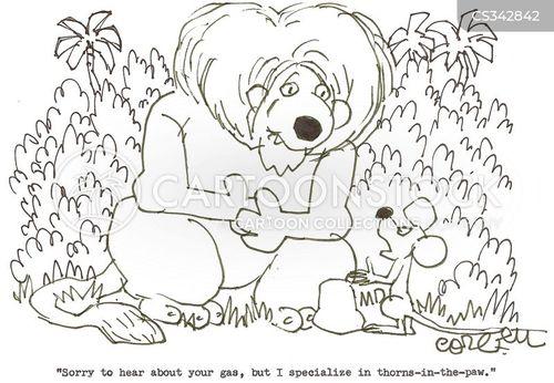 specialized medicine cartoon