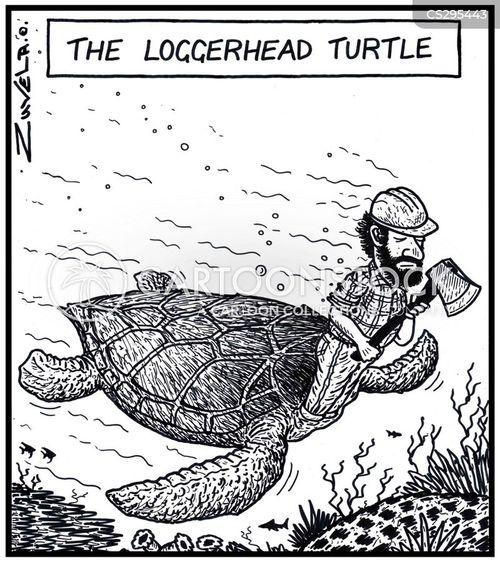 loggerhead cartoon
