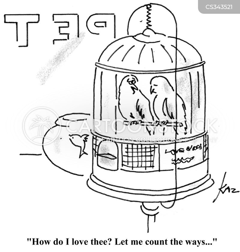 lovebird cartoon