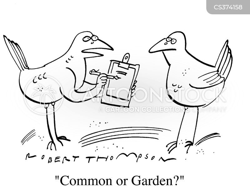 common cartoon