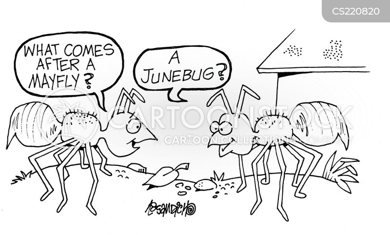 mayflies cartoon