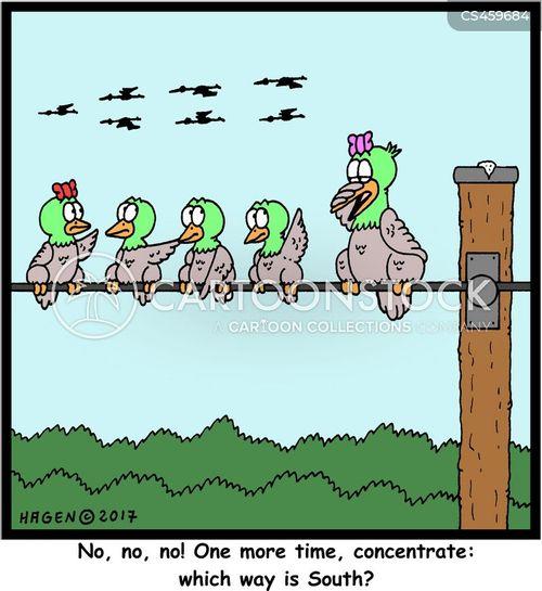 migration patterns cartoon
