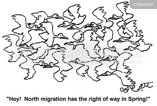 flying north cartoon
