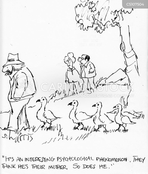 swans cartoon
