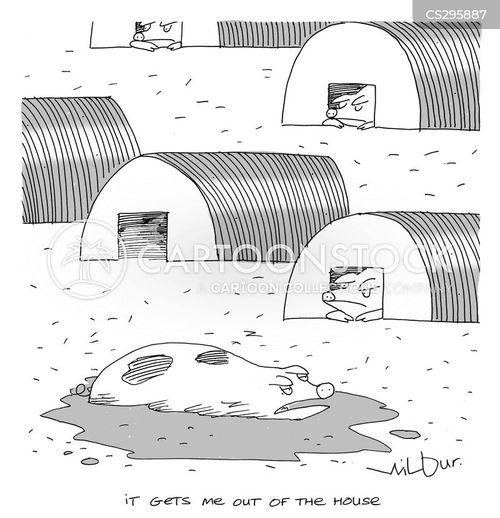 wallow cartoon