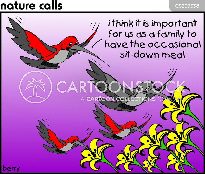 humming bird cartoon