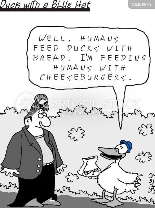 feed the ducks cartoon