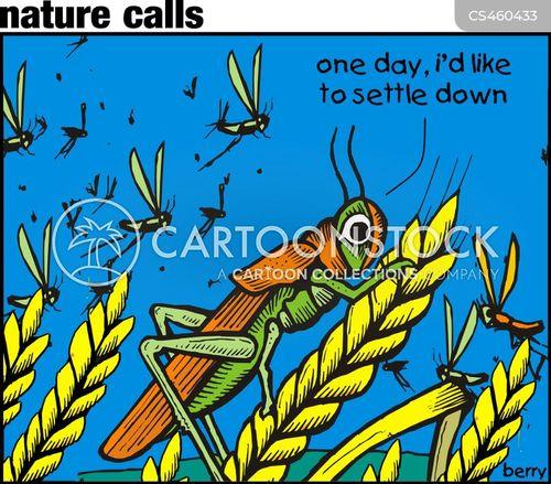 swarms cartoon