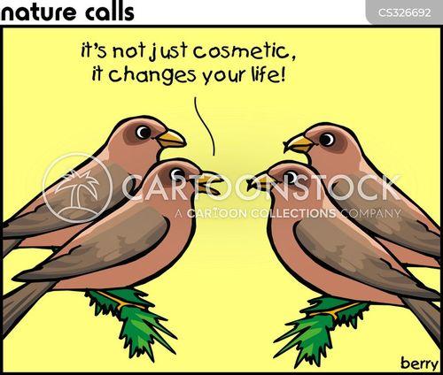 crossbills cartoon