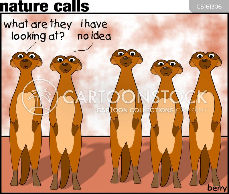 meerkat families cartoon