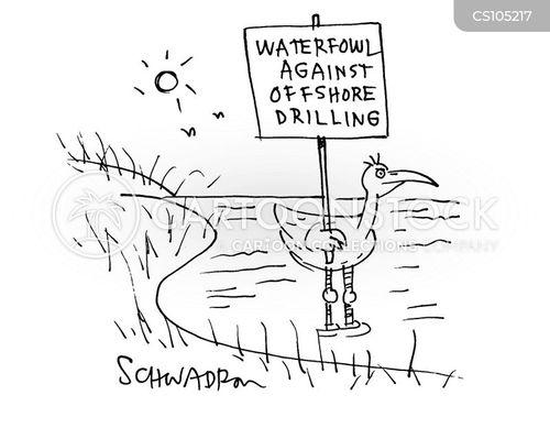 waterfowls cartoon