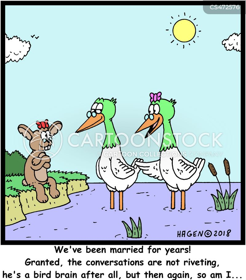 bird brained cartoon