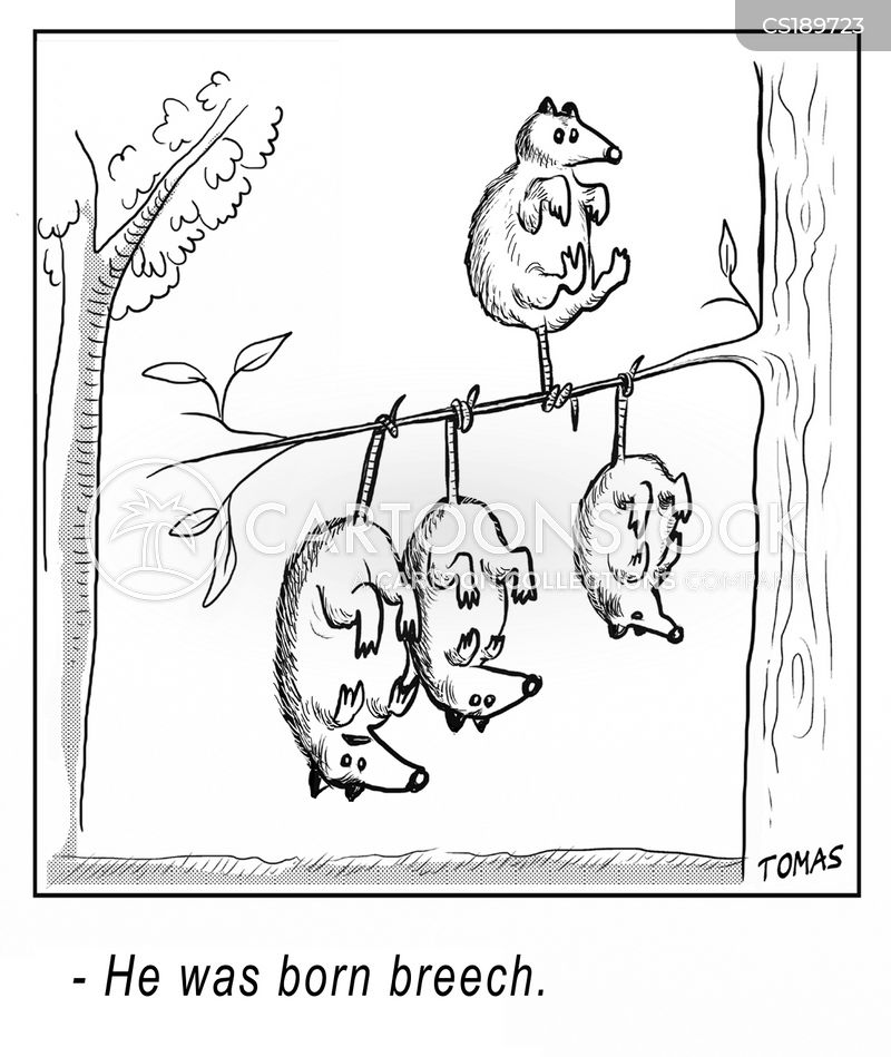 marsupial cartoon