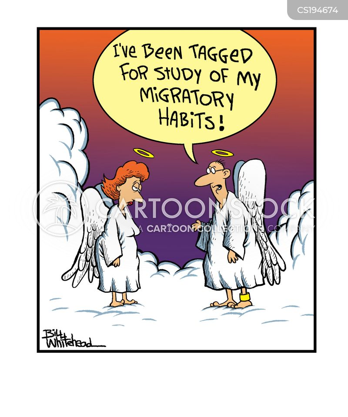 migratory habits cartoon