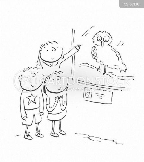 strigiformes cartoon