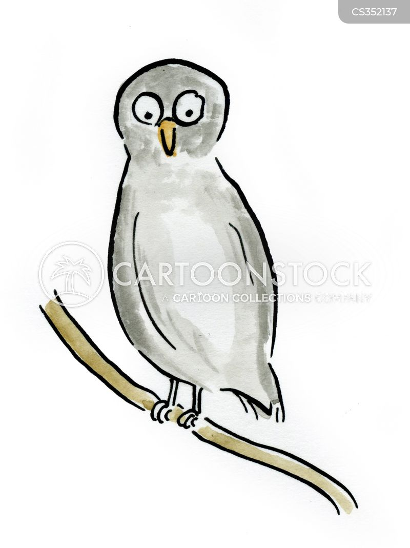 barn owls cartoon