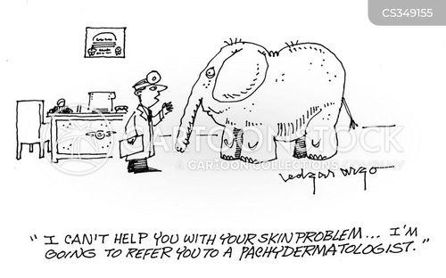 pachydermatologists cartoon