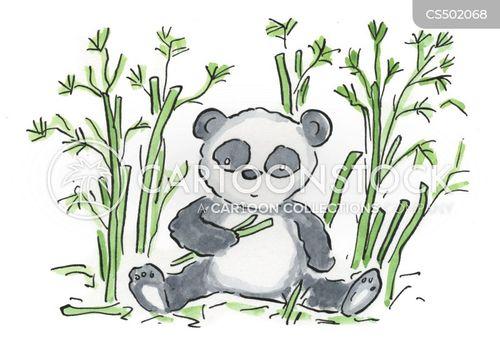 panda cubs cartoon