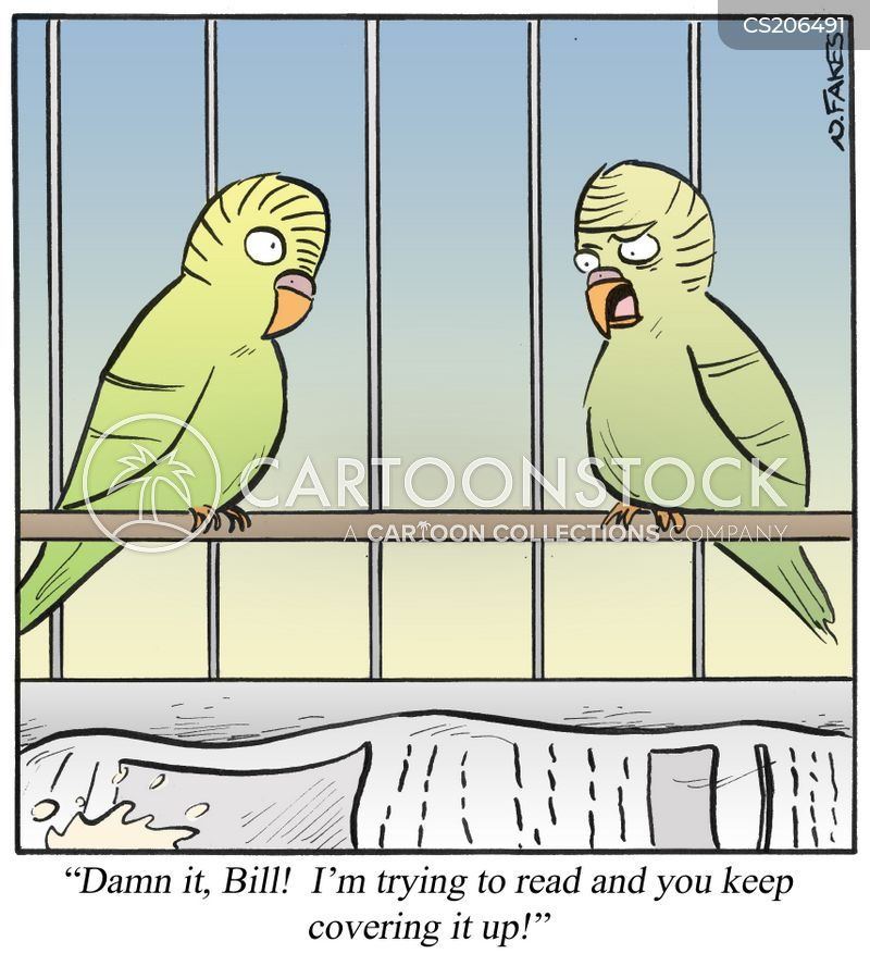 parakeets cartoon
