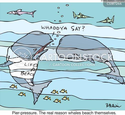beached whales cartoon