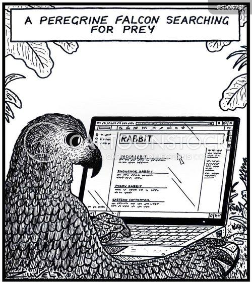 peregrine falcon cartoon