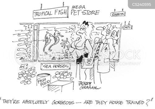 sea horse cartoon