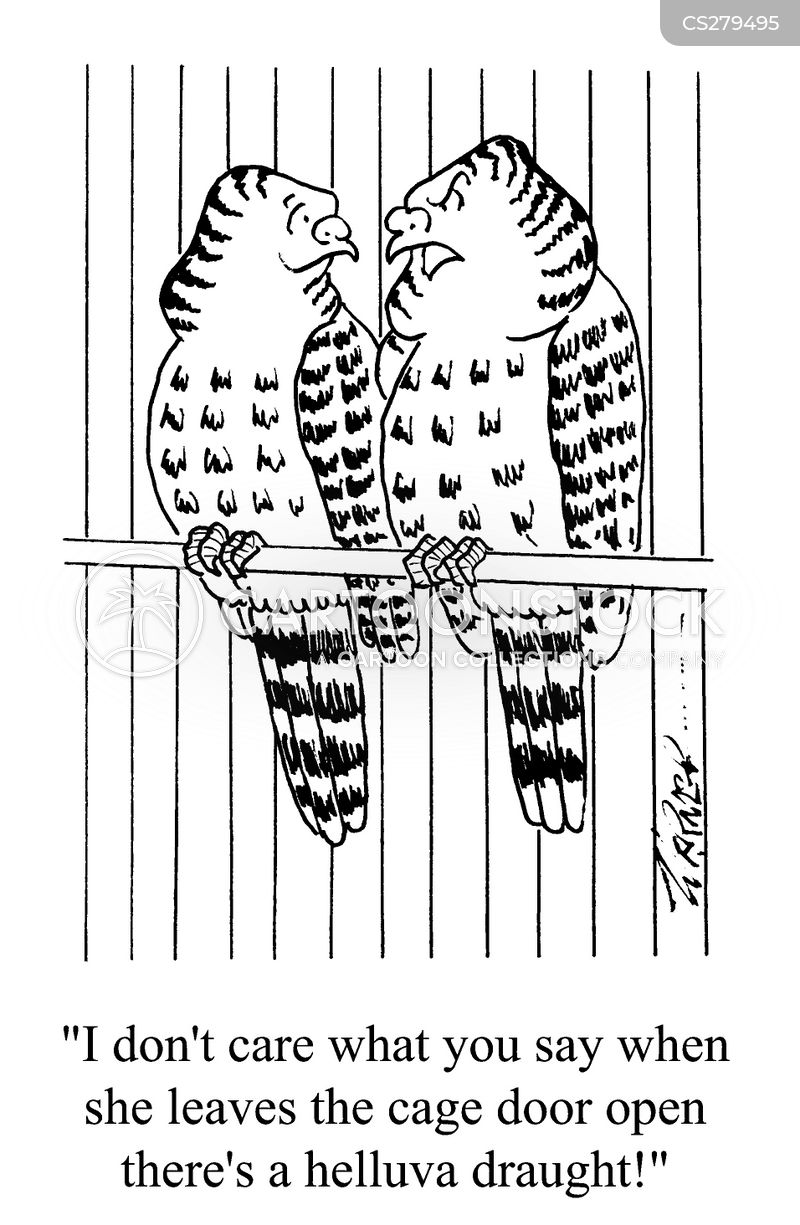 budgerigars cartoon