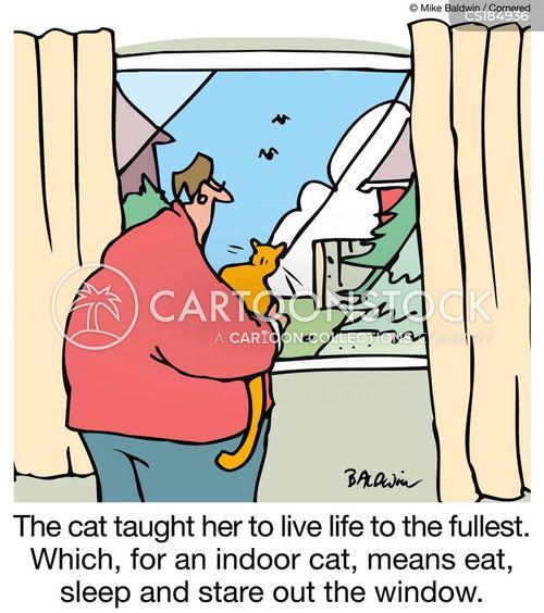 indoor cat cartoon